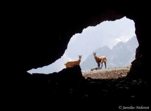 Kamzíčia jaskyňa, Belianske Tatry